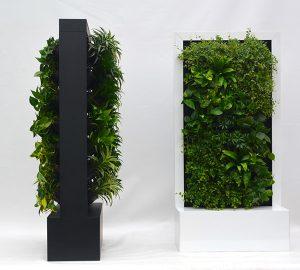 Raumteiler und Wandelement bepflanzt mit Hydrokulturpflanzen