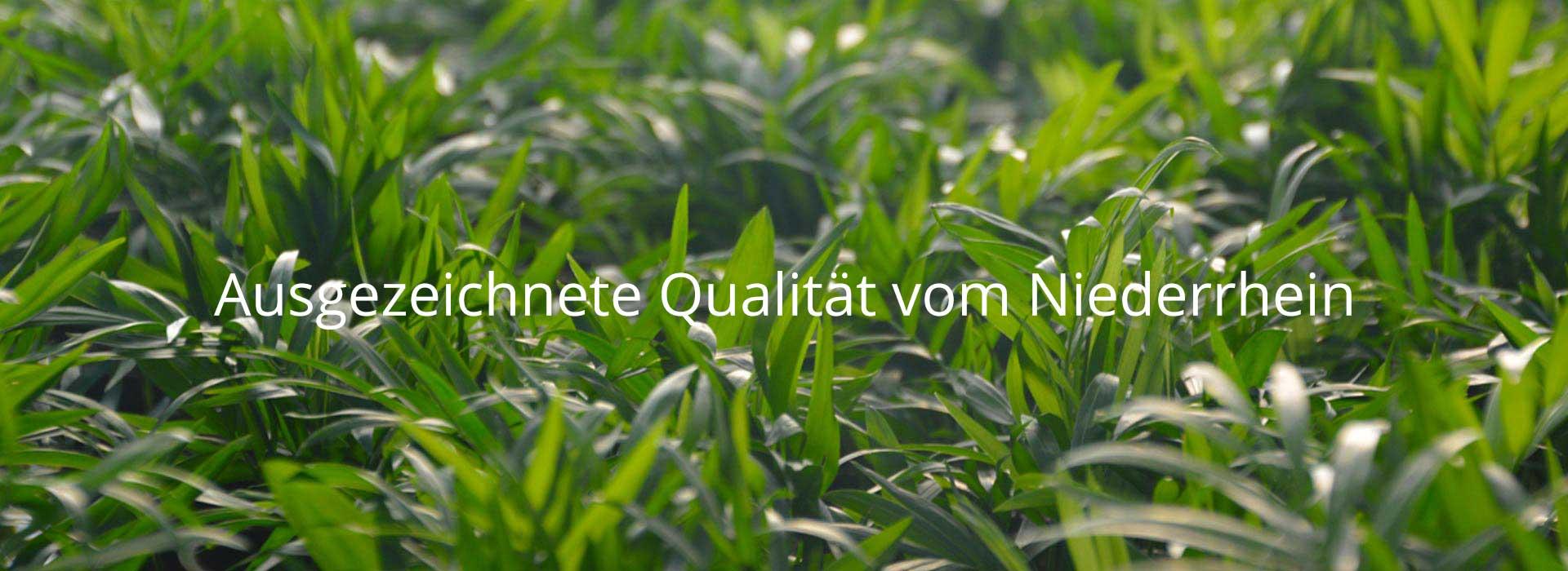 Ausgezeichnete Pflanzenqualität vom Niederrhein
