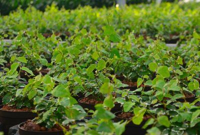 Beitragsbild-Hydrokulturpflanzen
