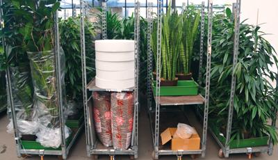 Wir beschaffen alle notwendigen Materialien für die Hydrokulturpflanzen