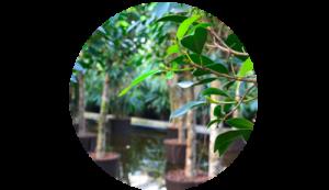 Große Auswahl an Hydropflanzen