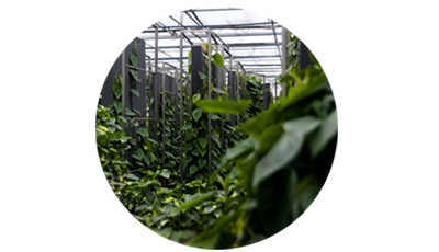 Pflanzsysteme mit Hydrokultur