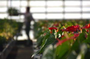 Unser Pflanzensortiment vielfach auszeichnet