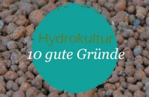 Beitragbild für den Flyer 'Warum Hydrokultur'