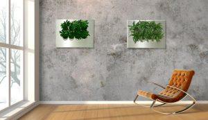 Die grünen Bilder