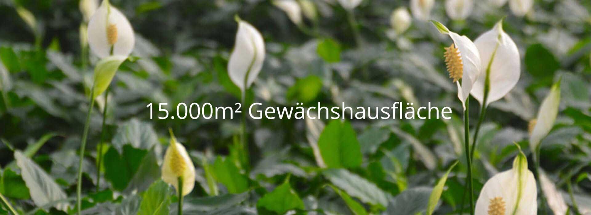 15.000 qm Gewaechshausflaeche