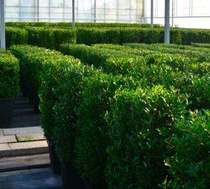 Erdpflanzen für den Aussenbereich in ausgezeichneter Qualität