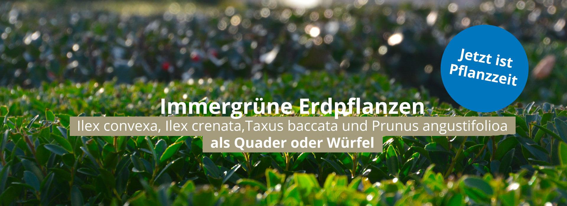 Slider_Erdpfanzen_1920x700